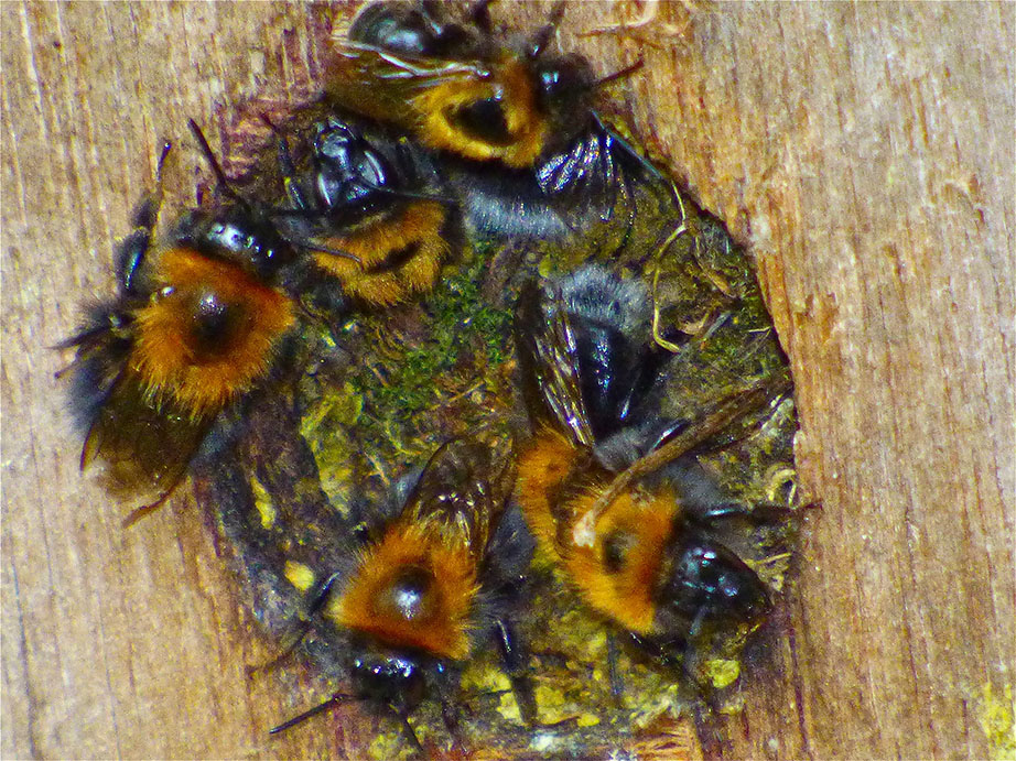 Tree Bees take over. Any tits wanna argue?